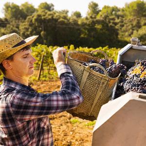 Farmer Loading Harvest into Truck